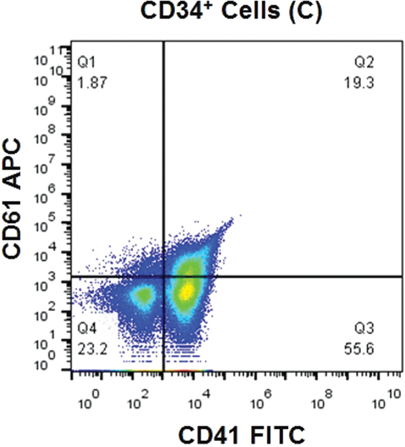 Figure 6 Shows dot plot analysis of ex vivo produced platelets by CD34 cord blood using CD41(FITC) on the FSC and CD61(APC)